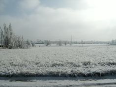 2009 ice storm in Springdale Arkansas. This was after the storm when the sun was coming out. It's one of my favorites.