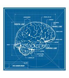 brain Blue print