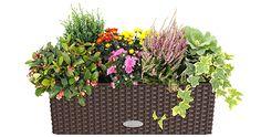 Planter Pots, Autumn, Fall Season, Fall