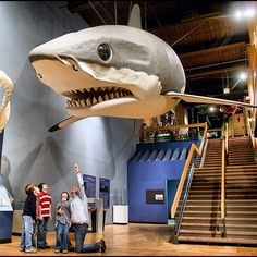 #TravelTuesday Trivia: This giant replica of a Megalodon shark, a species which once roamed the South Carolina coast, hangs as a permanent exhibit at South Carolina State Museum and is the average size of the actual sharks. Exactly how giant is this shark?