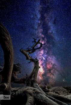 ~~Timeless | astrophotography of a favorite tree atop the Castle of Monolithos, Greece | by Stergos Skulukas~~