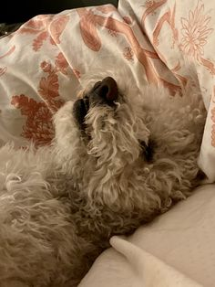 Peanut Pictures, Mini Poodles, Poodle Mix, Life Photo, Dog Life, Bean Bag Chair, Dogs, Animals, Furniture