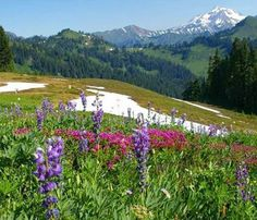 Guide to Summer Wildflower Hikes from the Washington Trails Association http://www.wta.org