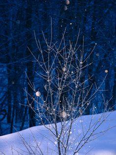 Diamond dust - Winter in Biei, Hokkaido, Japan