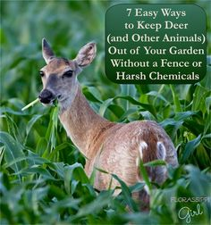 7 Easy Ways to Keep Deer (and Other Animals) Out of Your Garden - Without a Fence or Harsh Chemicals