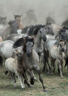 Wicked 25 Awesome Mustangs Wild Horse https://meowlogy.com/2018/02/28/25-awesome-mustangs-wild-horse/ Horses needed in order to travel for extended hours at good speeds