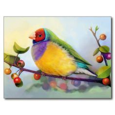 Gouldian Finch postcard. #zazzle #petopet #finch #bird #gouldianfinch #erythruragouldiae #ladygouldianfinch #painting #petportrait #realism #realistic #drawing #rainbow #avian #emmil #thomas #deviantart #merchandise #sale #finches #birds #post #card #cards #postcard #postcards