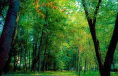 Near Zakopane, Poland