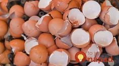 Eggshells could find use in ceramics production By Ben Coxworth February year approximately tons tonnes) of discarded eggshells must be transported and disposed of in the US alone Us Department Of Agriculture, Compost, Nordic Interior, Egg Shells, Natural Medicine, Clever Diy, Good Advice, Interior Design Living Room, Natural Skin Care