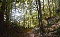 Fotowedstrijd Toerisme Voerstreek, winnende foto maand oktober 2017. Trunks, Plants, Belgium, October, Drift Wood, Flora, Plant, Planting