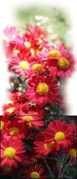Myomin herbs for my estrogen dominance,