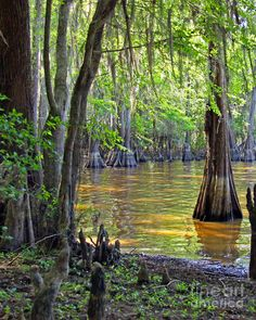 ✮ Sunlight shining into a cove at Caddo Lake State Park in Texas