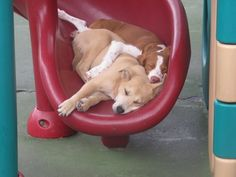 When these two friends fell asleep during recess. | 18 Times Doggie Day Care Was The Happiest Place On Earth
