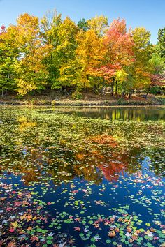 Autumn Reflectionat domaine Howard in Sherbrooke city in the Eastern Townships of Quebec Sherbrooke Quebec, House Ceiling Design, Voyager Loin, Canada Travel, Autumn, Fall, Reflection, River, Wall Art