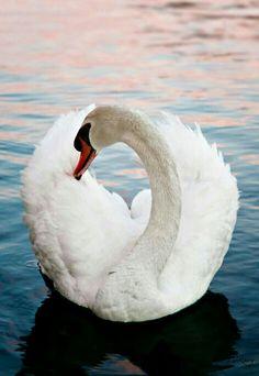 Elegant Swan!
