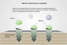 Understanding Naloxone. Pinned by the You Are Linked to Resources for Families of People with Substance Use  Disorder cell phone / tablet app on June 3, 2014;      Android - https://play.google.com/store/apps/details?id=m.thousandcodes.urlinkedlite;                    iPhone - https://itunes.apple.com/us/app/you-are-linked-to-resources/id743245884?mt=8co