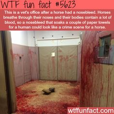 The vet's office after a horse had a nosebleed - WTF fun fact