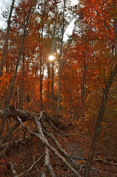 Trees are ablaze with fall color ~ Ozark National Forest, Northwest Arkansas