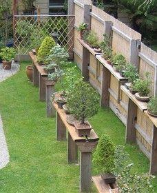 outdoor bonsai collection display