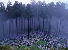 Мистический лес Аокигахара, Япония