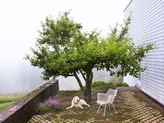 I love the idea of building around trees - seen some of it here in NC - patios or decks working around an existing hardwood tree. Preserve every native, uncommon tree possible.