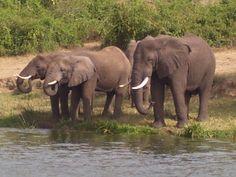 Queen Elizabeth National Park, Uganda. Kazinga Channel.  So wonderful!!