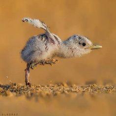 Письмо «Мы нашли новые пины для вашей доски «Beautiful birds».» — Pinterest — Яндекс.Почта