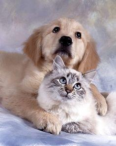 Эти забавные животные » Сайт веселого настроения