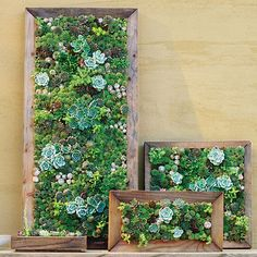 "We've all gone wild for those dramatic ""living walls"" of succulents. Here, grower Robin Stockwell shows you how you can make your own"