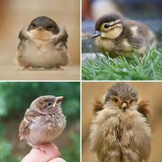 Pequeñas aves