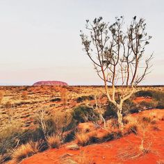 Uluru is incredible to look at from anywhere any angle in the area. Such a vast outback here