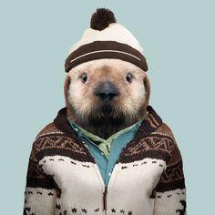 Sea Otter (Pup) - Enhydra Lutris