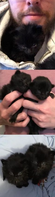 Man Heard Chirps Under His House, Found Tiniest Furballs And Raised Them Into Magnificent Cats