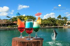 Your dream vacation is waiting! Join us for drinks and fun at Dreams Puerto Aventuras Resort & Spa!