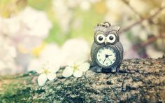 Vintage Clock Chain Tree Branch HD Wallpaper - ZoomWalls