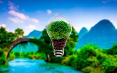 Lamp tree HD Wallpaper available in different dimensions Tree Hd Wallpaper, Original Wallpaper, Wallpaper Wallpapers, Beautiful Landscape Wallpaper, Beautiful Landscapes, Human Body Parts, Latest Hd Wallpapers, Incandescent Light Bulb, Green Nature