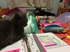 Miss Molly and Miss Pippin helping me Prayer Journal