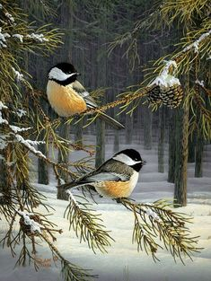 Chickadees by Sam Ti beautiful amazing