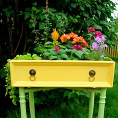 Learn how to transform an old drawer into a beautiful garden