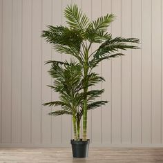 Beachcrest Home Brookings Floor Palm in Pot Topiary Plants, Ivy Plants, Potted Trees, Real Plants, Foliage Plants, Faux Plants, Palm Trees, Palm Plant, Fern Plant