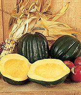 Early Acorn Hybrid Winter Squash Seeds and Plants, Vegetable Gardening at Burpee.com