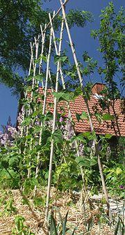 Bønnestativ af bambus