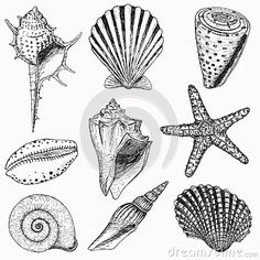 3D seashell tattoos | Shells collection. Vector set with seashells and starfish for you ...