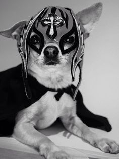 La Luchihuahua Libre, I fight for the Little Guy.