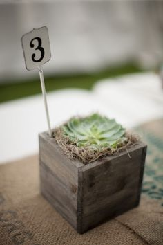Mini Succulent Table Numbers in Petite Wood Box Photograph by Ashley Davis Photography http://www.storyboardwedding.com/gorgeous-eco-friendly-country-chic-outdoor-colorado-wedding-at-lyons-farmette/