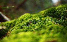 Forest Springtime - 1920x1200