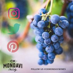 Let's follow each other everywhere! Find us also on Instagram, Facebook, and Twitter @CKMondaviwines Wine Cocktails, Blackberry, Cherries, Bottle, Pecan, Creative, Instagram Posts, Smooth, Meet