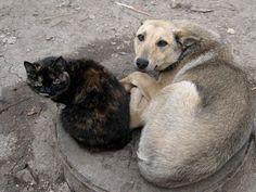 """Бездомными животными в Евпатории займутся волонтёры. Но за бюджетные деньги   (ФОТО) http://www.newc.info/news/21914/  Тендер на отлов и стерилизацию собак выиграла общественная организация """"От сердца к сердцу""""."""