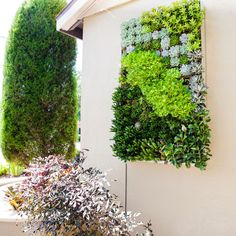 Outdoor Wall Hangings Succulent - http://www.clanvlg.com/outdoor-wall-hangings-succulent/ : #OutdoorFurniture Outdoor Wall Hangings Succulent – Make a living wall hanging for display in your garden with the help of succulent plants. Succulents are plants with fleshy segments that can tolerate drought. Succulents will grow in a shallow wooden frame, which makes them an excellent choice for outdoor...