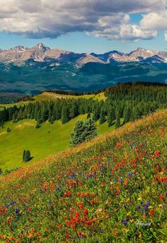 Shrine Pass in Vail, Colorado